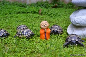 Myoki - Monk sculpture - tortoise - outside - meditating praying - sculptures monks - buddhism - buddhist cute spiritual orange buddha nature.JPG
